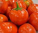 20 Seeds of Hmong Red Eggplant / Solanum aethiopicum