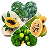 LeSharp Fresh Garden Seeds Collection Set Fruit Papaya,Tropical Fruit Tree Seeds Plant Non-GMO, Open Pollinated Seeds Papaya Seeds# 40pcs