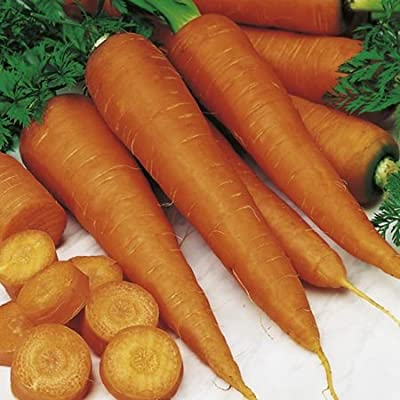 300+ Carrot Seeds- St. Valery- Rare French Heirloom!