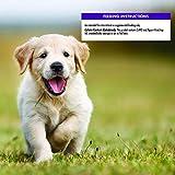 Wellness Soft Puppy Bites Natural Grain Free