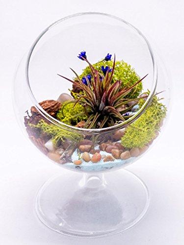 "Air Plant Terrarium Kit | Nature Series River's Edge | Complete Tillandsia Gift Set | 5"" Glass Globe with 3"