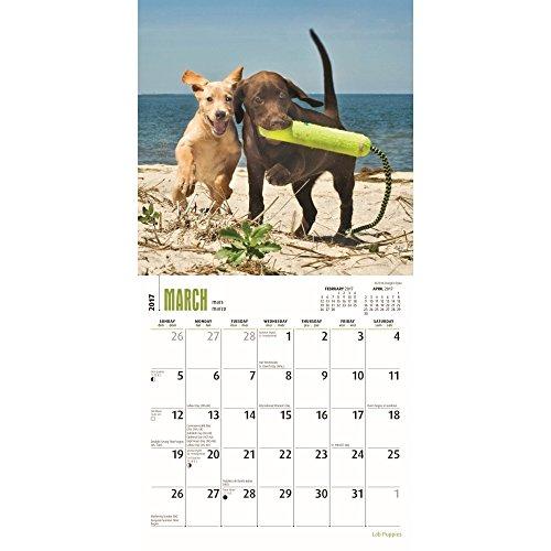 Lab Puppies 2017 Small Wall Calendar Photo #2
