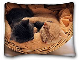 Love Each Kitten Black Brown Warm and Lovely Design Zippered Pillow Case 20x30 (Twin sides) by supermalls