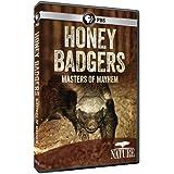 Nature: Honey Badgers: Masters of Mayhem
