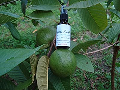 Hair loss treatment - 1 oz - guava leaves extract from ORGANIC leaves - No Side Effects - Natural vitamins and minerals stop hair loss & re-grows hair!