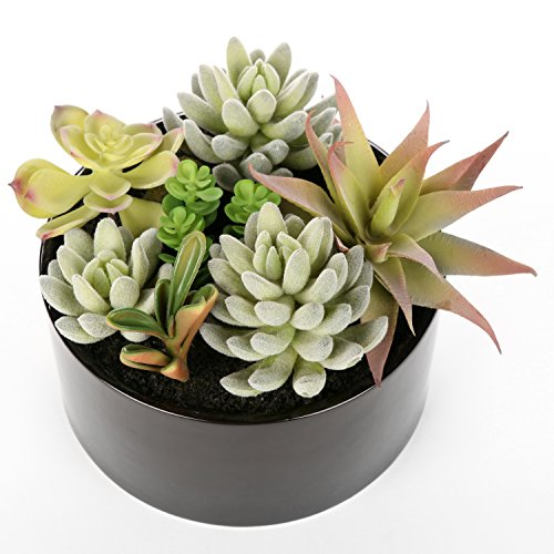 Decorative Round Faux Potted Succulents / Artificial Plant in 6 Inch Glazed Black Ceramic Flower Pot
