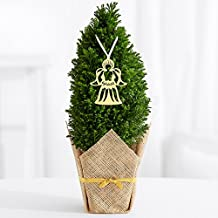 ProFlowers 1 Count Green Guardian Angel Tree - Mini Christmas Tree Mothers Day