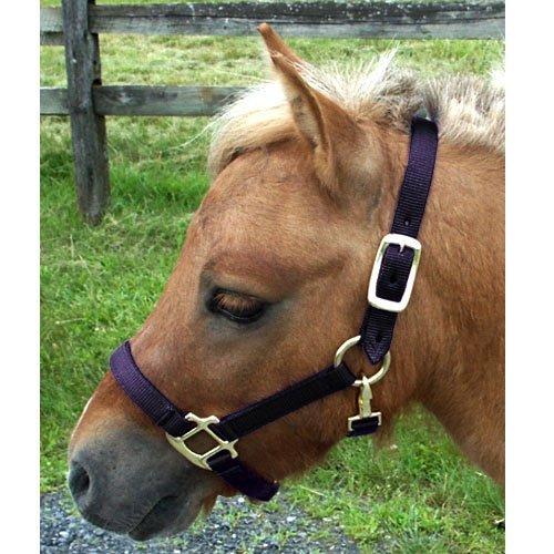Intrepid International Nylon Miniature Horse Halter, Black, Mini