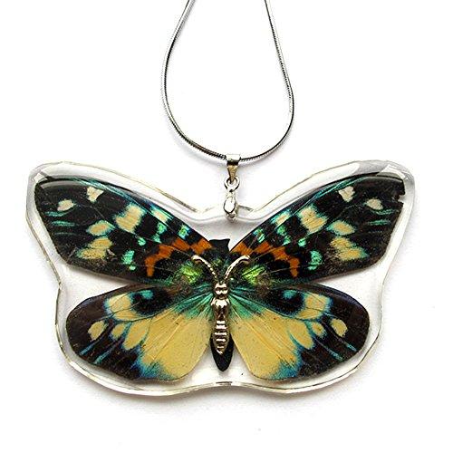 Genuine Butterfly Satsuma Nishiki Necklace Pendant w/ Chain