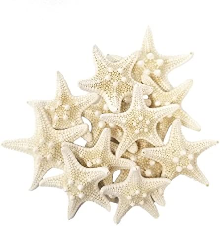 "12-4/"" Sugar Starfish Dried Star fish Shell Wedding Craft Decor Item # ssf4-12"