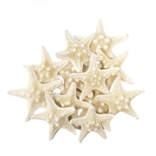Tumbler Home Certified Knobby White Starfish 1 to 2 Set of 12 - Wedding Seashell Craft - Hand Picked and Professionally Packed ...