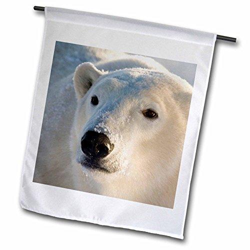 Churchill Blanket - 3dRose fl_70235_1 Canada, Manitoba, Hudson Bay, Churchill, Polar Bear-CN03 BJA0026-Janyes Gallery Garden Flag, 12 by 18-Inch