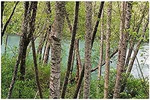 تابلوه المناظر الطبيعية للصور بمقاس 40 سم × 30 سم - 2724819375583