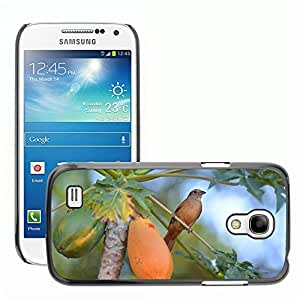 Just Phone Cases Slim Protector Hard Shell Cover Case // M00128166 Bird Papaya Thrush Birdie // Samsung Galaxy S4 Mini i9190
