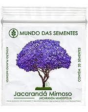 20 Sementes Jacarandá Mimoso Mimosifolia Azul Árvore