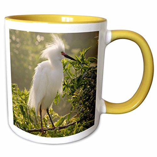 3dRose Danita Delimont - Birds - Snowy Egret bird, Alligator Farm, St. Augustine, FL - US10 MPR0261 - Maresa Pryor - 11oz Two-Tone Yellow Mug - St Fl Outlets Augustine