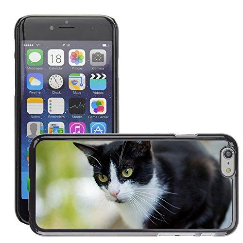 "Bild Hart Handy Schwarz Schutz Case Cover Schale Etui // M00134800 Cat Close Hauskatze Tier // Apple iPhone 6 PLUS 5.5"""