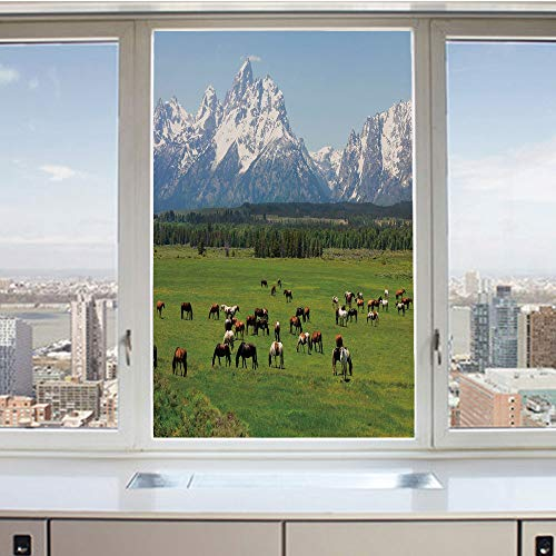 3D Decorative Privacy Window Films,Grand Teton National Park Snowy Mountains Fresh Greenery Trees Animals Decorative,No-Glue Self Static Cling Glass film for Home Bedroom Bathroom Kitchen Office 24x36