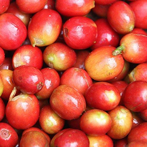 Bodhi Leaf Trading Company 5 lbs, Rwanda Coko (Honey Process) Unroasted Green Coffee Beans, Specialty Arabica Raw Coffee Beans for Roasting by Bodhi Leaf Trading Company (Image #4)