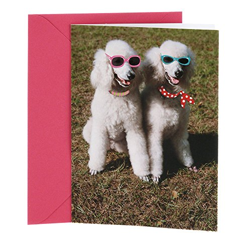Hallmark Shoebox Funny Birthday Card for Her (Two Poodles) (Cute Birthday Cards For Best Friend)