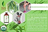 SVA Organics Eucalyptus Essential Oil Organic 4 Oz