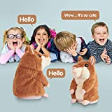 Kids Toys Talking Hamster Repeats What You