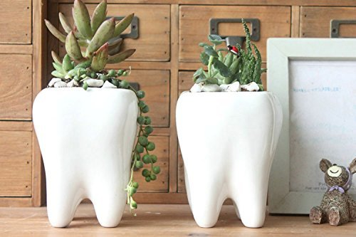 Gift Prod 2 Pcs Teeth Pots White Ceramic Succulent Planter Pots / Mini Flower Plant Containers Cute Animal Shaped Cartoon Planter Pots Plant Window Boxes (Style (Pot Gift)