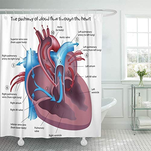 Compare Price To Heart Blood Flow Diagram Tragerlawz