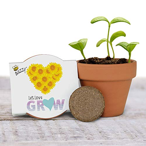 Buzzy Seeds Mini Terra Cotta Grow Pot 12-Pack - for Weddings, Parties, Events as Modern, Trendy, Unique and Fun Gardening Favors and Gifts - Includes Everything You Need! (Love Series - Sunflower)
