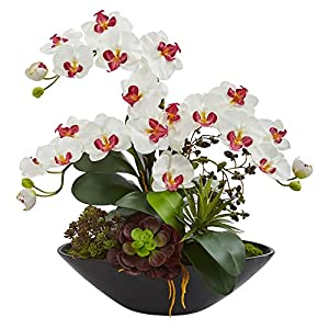 Nearly Natural 1605-WH Phalaenopsis Orchid and Mixed Succulent Garden Artificial Black Vase Silk Arrangements, White 20