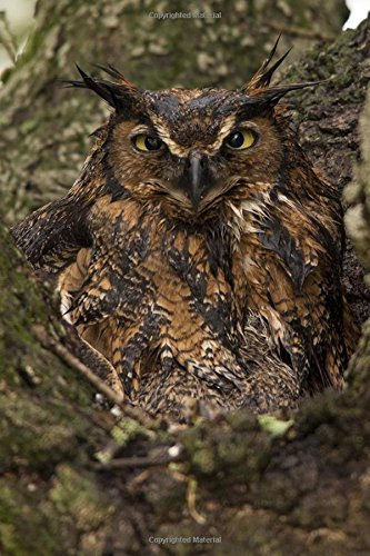Read Online Grumpy Owl Camouflaged Against a Tree Bird Journal: 150 Page Lined Notebook/Diary ebook
