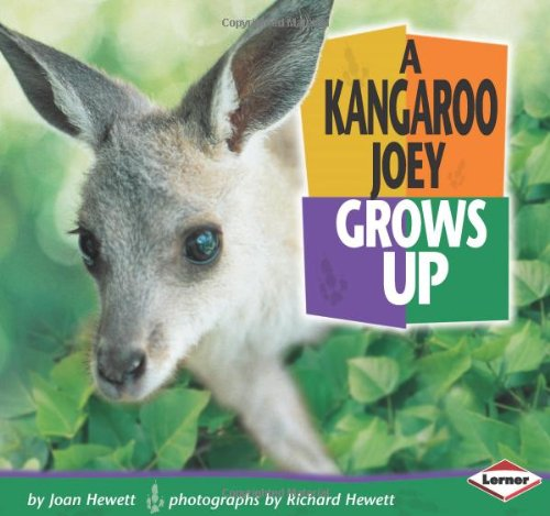 A Kangaroo Joey Grows Up (Baby Animals)