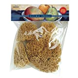 Pro Art Sponge Set, 4 Grass Sponges