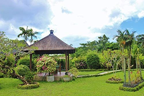 Home Comforts Canvas Print Indonesia Orchid Garden Tropical Flora Island Bali Vivid Imagery Stretched Canvas 32 x 24