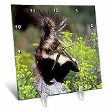 3dRose dc_92145_1 North America, USA, Montana Skunk Wildlife US27 TVE0004 Tom Vezo Desk Clock, 6 by 6-Inch
