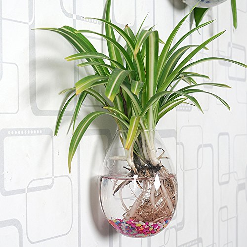 Set-of-2-Wall-Mounted-Clear-Glass-Terrariums-Hanging-Flower-Vase