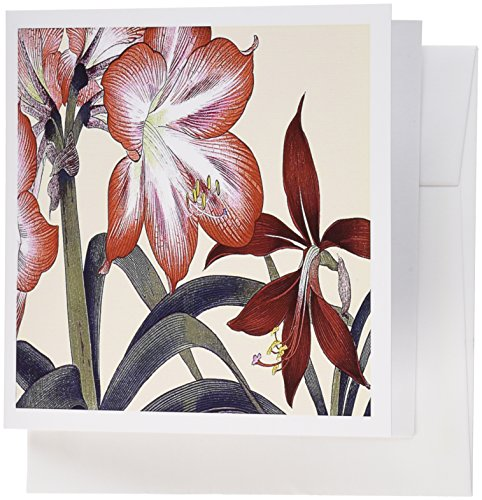 Amaryllis Set Red - 3dRose Amaryllis Flowers in Peach and Dark Red with Yellow Stamens - Greeting Cards, 6 x 6 inches, set of 12 (gc_171388_2)
