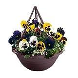 Bloem 17in Milano Hanging Basket Exotica MBHB15175644; 12 pack
