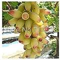 Yongyut Seed fruit fruit tree seedlings potted Kyoho grape red table grapes grape seedlings seeds 20 seeds