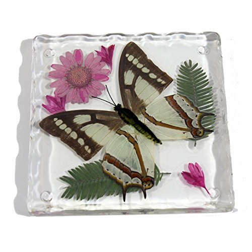 REALBUG Resin Coaster with Common Nawab Butterfly (Butterfly In Resin compare prices)