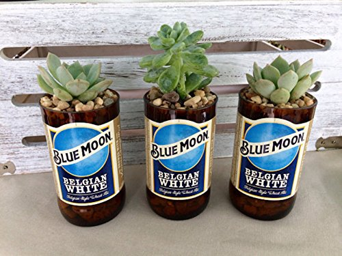 Blue Moon 12 oz Glass Bottle Succulent & Cactus Planter