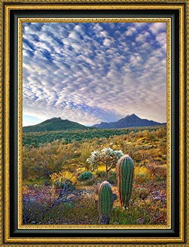(Saguaro and Teddybear Cholla amid Flowering Lupine and California Brittlebush - 2 by Tim Fitzharris - 21.25