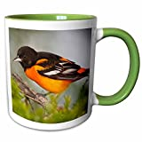 3dRose Danita Delimont - Birds - Baltimore Oriole bird, South Padre Island, Texas, USA - US44 LDI0737 - Larry Ditto - 11oz Two-Tone Green Mug (mug_146862_7)