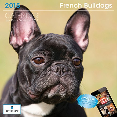 french bulldog desk calendar 2015 - 1