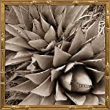 16x16 Desert Plants III by Stefko, Bob: Gold Bamboo PSSFK-158