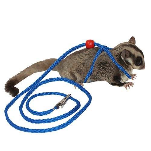 Exotic Nutrition Sugar Glider & Squirrel Harness - Safety Leash for Small Animals