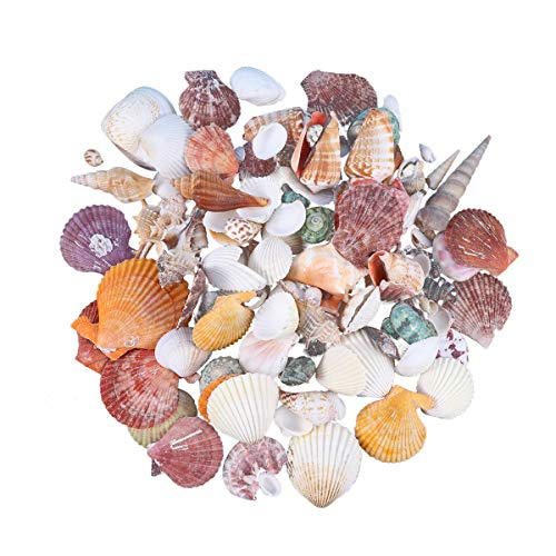 (Healifty 130pcs Mini Sea Shells Mixed Beach Seashells for Candle Making Fish Tank and Vase Fillers)