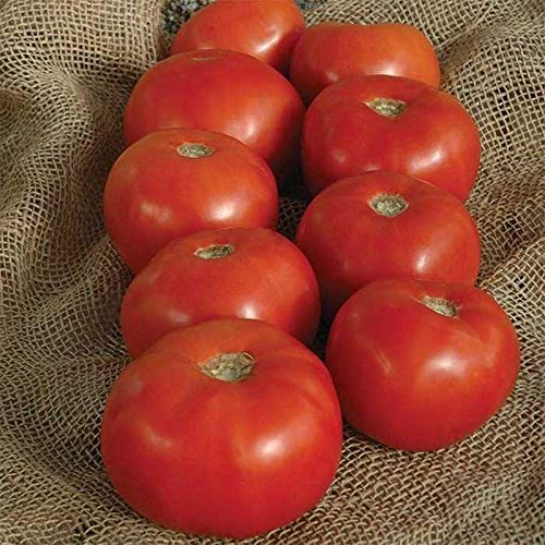 Bulk (1000) Tomato Seeds - Several Varieties Plant them or re-sell them!(1000 - Creole Tomato Seeds)