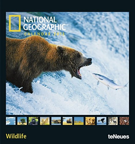 National Geographic Calendar Wildlife 2013