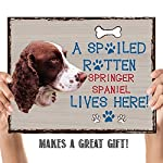 "Springer Spaniel-Dog Poster Print-10 x 8"" Wall Decor Sign-Ready To Frame.""A Spoiled Rotten Springer Spaniel Lives Here"". Pet Wall Art for Home-Kitchen-Garage. Gift-English Springer Spaniel Owners! 8"